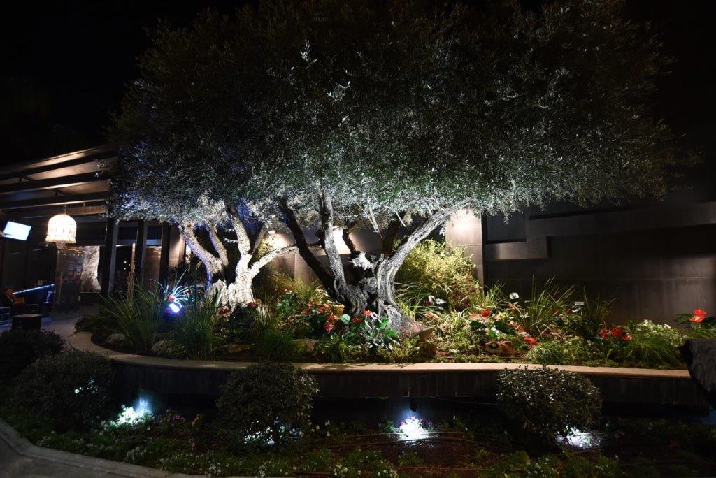 אולם חצר המלכה עיצוב עצי זיית